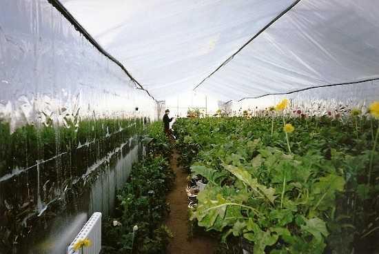 круглогодичного садоводства